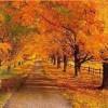 Autumn Flavours: Equinox.