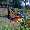 Love Your Garden...