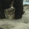 Flooded, Run over by Car, Paralyzed Tragic Cat Swims toward Rehabilitation.