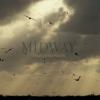 New Midway Trailer from Photographer Chris Jordan.