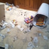 Three dogs. Which one trashed the house? {Video}