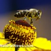 Amazing bee products that cure and protect ~ Paul Fassa