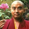 Video: Yongey Mingyur Rinpoche On Using Panic Attacks For Meditation