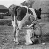 The Raw Milk Health Craze: Quality in Moderation.