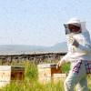 Turkish Women Beekeepers to Lead Organic Revolution.