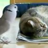 Five Funny Cat Videos.