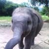 Baby Elephant & Adversity.