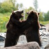 Yogis & Bears: Competition & Nature.