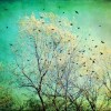 Bye-Bye, Blackbirds. ~ Heather Grimes