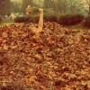 Autumn: The Equinox Mysteries.