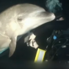 Dolphin Asks for Help, Camera Crew Rescue Her. Wow. {Video}