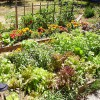 Why it's Important to Learn How to Grow Your Own Garden.
