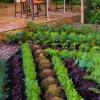 Plant a Summer Garden.