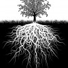 The Foundational Trinity:  Grounding, Orienting & Resourcing.