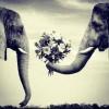 The Secret Life of Elephants.