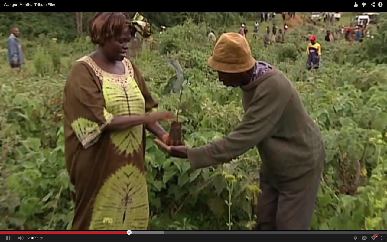 plant 1 billion trees  remembering the wangari maathai