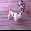 """Jump Goat Jump."" {Video}"