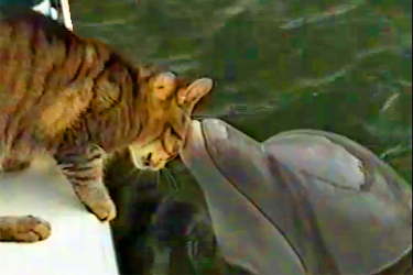 Cat And Dolphin Play Awww Amp There S More Elephant