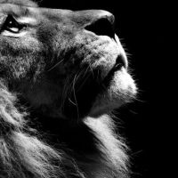 Healing Karmic Wounds: The Lion and the Lamb.