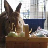Greening the Easter Baskets: Fresh & Fun Ideas.