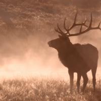 The Magic of Yellowstone