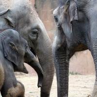 My Year as an Elephant.