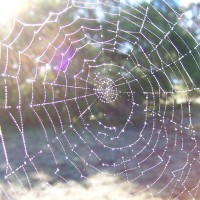 How to Avoid Spider Freak Outs & Embrace Fear (Yogi Style).