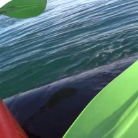 Whale Turbo Boost! Kayakers get a Lift they won't forget.