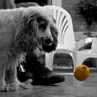 The Good News: Dogs Vs. Lemons. {Video}