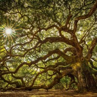 We Do Tree Pose To Fall. ~ Michael Mark {Poem}