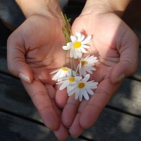 The 6 Perfections: Generosity.