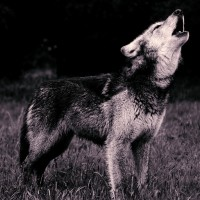 Howling for October.
