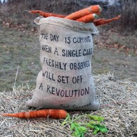 This is One Garden Fresh Carrot I Wouldn't want to Eat. {Photos}