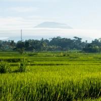 5 Tips for Mindful Budget Travelling: Ubud, Bali.