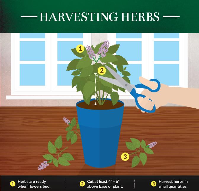 Kitchen Herb Gardens That Will Make Cooking Wonderful: Best Herbs For The Kitchen Gardner. {Infographic