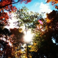 Jyotish Sidereal Horoscopes for the Waxing Moon Cycle {October 12th to 27th}.