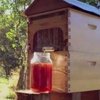 Honey on Tap & DIY Beekeeping: Too Good to Be True?
