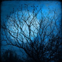 Jyotish Sidereal Horoscopes for the Waxing Moon Cycle. {November 11th to 25th}