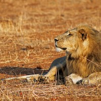 7 Things I Learned from Cecil the Lion.