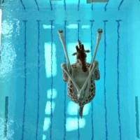 High-Diving Giraffes & Trampolining Elephants: Stunning Animation by Nicolas Deveaux. {Fun Videos}