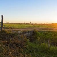 A Successful Organic Farming Movement in Brazil.