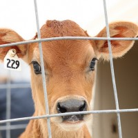 Here's Another Big Reason to Quit Eating Meat.
