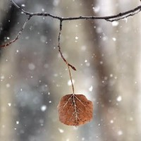 Standing Still Beneath Blowing Branches. {Poem}