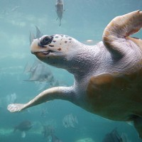 The Plastic Problem Threatening Sea Turtles & What We Need to Do to Save Them.