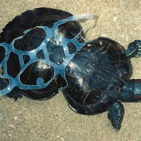 How we can Lean into Plastic's Painful Legacy & Make a Difference.