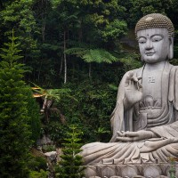 A Buddha under a Tree. {Poem}