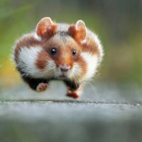 The Wild World ~ Animals Like You've Never Seen Them. {Funny}