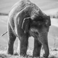#JoinTheHerd: Make 2016 the Year of the Elephant.