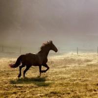 Ayurveda's Aphrodisiac---Strength of 10 Horses. {Adult-ish}