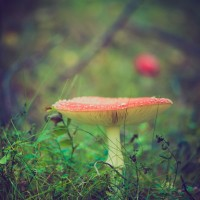 What Are Medicinal Mushrooms, & How Do They Work?